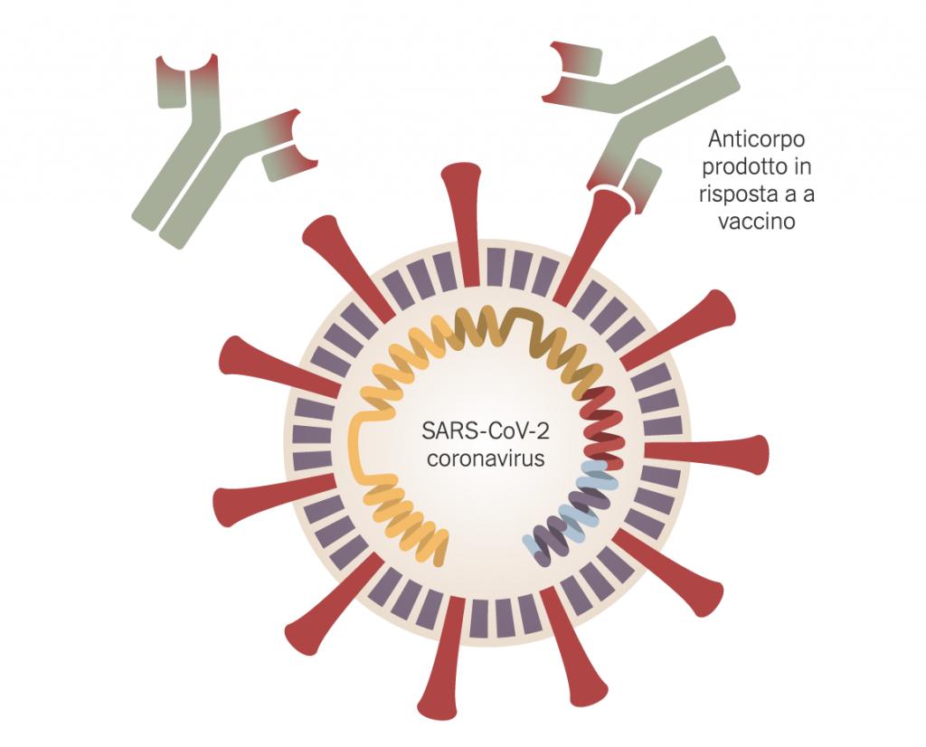 Sars Cov-2 Coronavirus