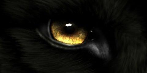 Bestia nera