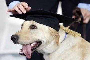 Cane laureato